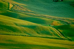 Zones de blé vertes Images libres de droits