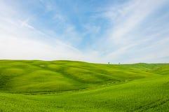 Zones de blé vertes dans les côtes de la Toscane Images libres de droits