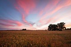 Zones de céréale Photo libre de droits