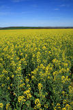 Zones de Canola photos stock