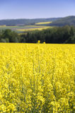 Zones de Canola Photographie stock