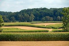Zones de maïs photographie stock