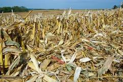 Zones de maïs après moisson photos libres de droits