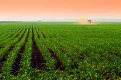 Zones de maïs au coucher du soleil Photographie stock libre de droits
