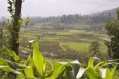 Zones de rizière, Nagarkot, Katmandou, Népal Photographie stock