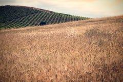 Zones de texture et de vigne photographie stock