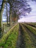 Zones et arbres Photo libre de droits