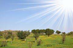 Zones et prés avec une herbe verte Image libre de droits