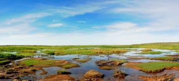 Zones humides Image libre de droits