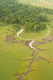Zones humides de Mara de masai Images libres de droits