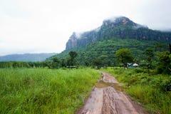 Zones humides et forêt verte Photo libre de droits