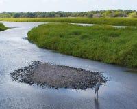 Zones humides sauvages Image libre de droits