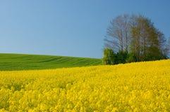 Zones jaunes Image libre de droits