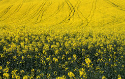 Zones jaunes Images stock