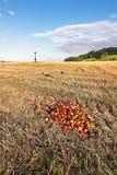 Zones moissonnées d'automne photo libre de droits