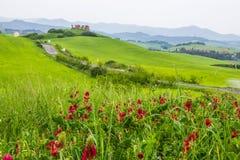 Zones vertes en Toscane images libres de droits