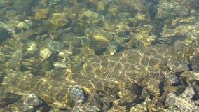 Zonglans onder water, op de steenbodem van de rivier Slowmo Volledige HD stock video