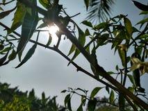zonlicht stock foto