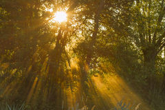 zonlicht royalty-vrije stock foto's