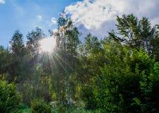 zonlicht Royalty-vrije Stock Foto