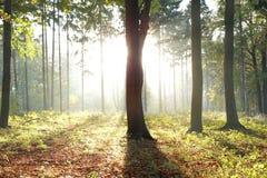 Zonlicht achter een boom Royalty-vrije Stock Fotografie