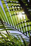 Zonlicht Backlit tussen Bladeren Royalty-vrije Stock Fotografie