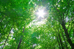 Zonlicht in bomen van bos Royalty-vrije Stock Afbeeldingen