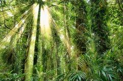 Zonlicht in de erfenisregenwoud van de dorrigowereld Stock Foto's