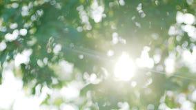 Zonlicht die onder groene bladeren dansen die mooie bokeh veroorzaken stock footage