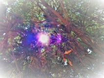 Zonlicht die uit uit het hiaat van bomen komen royalty-vrije stock afbeeldingen