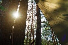 Zonlicht door boomboomstammen en een deel van de toeristentent in het bos stock afbeelding