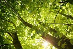 Zonlicht door de bomen Royalty-vrije Stock Afbeeldingen