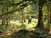 Zonlicht door de bomen Royalty-vrije Stock Foto's