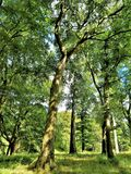 Zonlicht door de bomen in Centraal Dublin royalty-vrije stock afbeeldingen