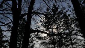 Zonlicht door de takken van bomen in het bos stock footage