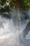 Zonlicht door rook van blad het branden in tuin Royalty-vrije Stock Foto's