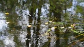Zonlicht en de rivier stock videobeelden