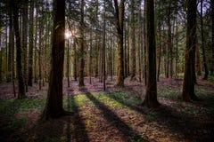 Zonlicht en schaduwen in het hout Royalty-vrije Stock Foto