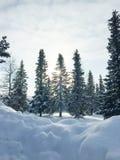 Zonlicht en sneeuw op bomen Royalty-vrije Stock Afbeeldingen