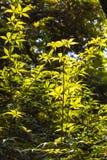Zonlicht groene bladeren in de dynastiepaleis van Nanjing Ming - zhan tuin Royalty-vrije Stock Foto