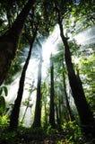 Zonlicht in het bos Royalty-vrije Stock Fotografie
