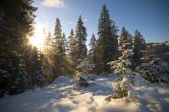 Zonlicht in het bos Royalty-vrije Stock Foto's
