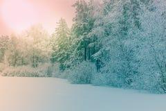 Zonlicht in het de winter bospanorama Het sprookje van de panoramawinter stock fotografie