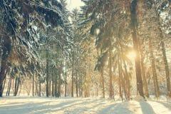 Zonlicht in het de winterbos Stock Afbeelding