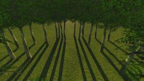 Zonlicht in het groene bos, de lentetijd Stock Afbeeldingen