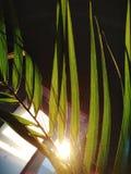zonlicht stock afbeelding