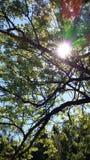 Zonlicht het zonnebaden treetop bladeren groene aard Stock Foto