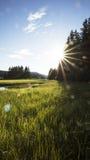 Zonlicht magisch in de zomer royalty-vrije stock foto's