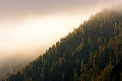 Zonlicht op bewolkte dag boven bos Royalty-vrije Stock Foto's
