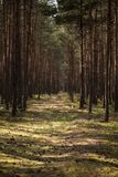 Zonlicht op gang in het bos met bomen tijdens de zomer stock afbeeldingen